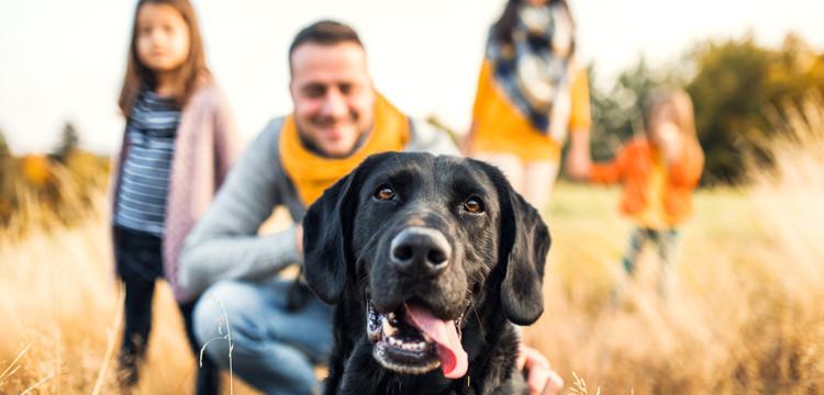 Potenciando el vínculo y la tenencia responsable de animales de compañía